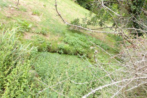 Cherves-Richemont - Le lavoir de la Bricoine (2 juillet 2017)