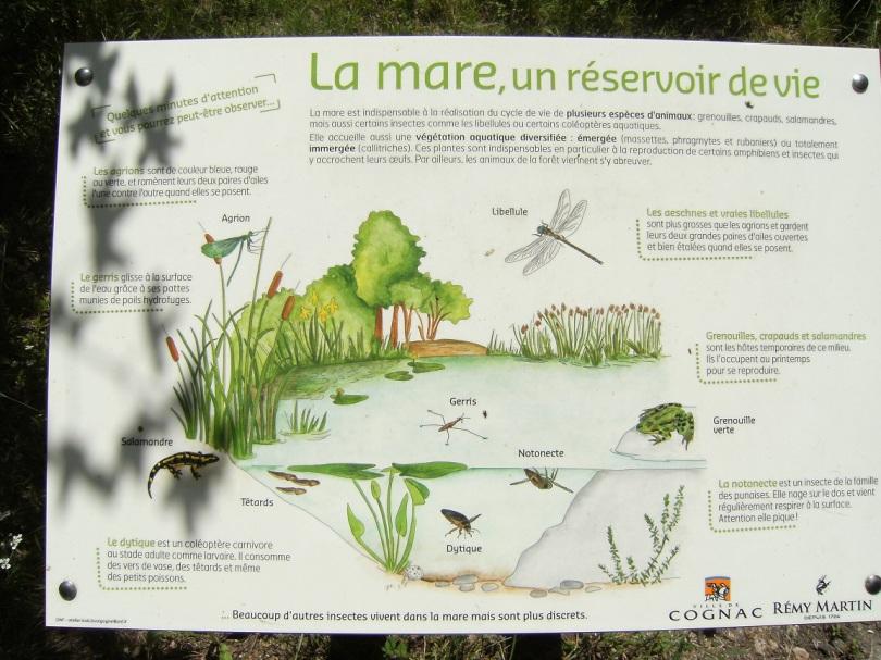 Parc François Ier (25 juin 2015)